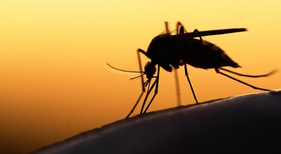 Ξεκινά η καταπολέμηση των κουνουπιών
