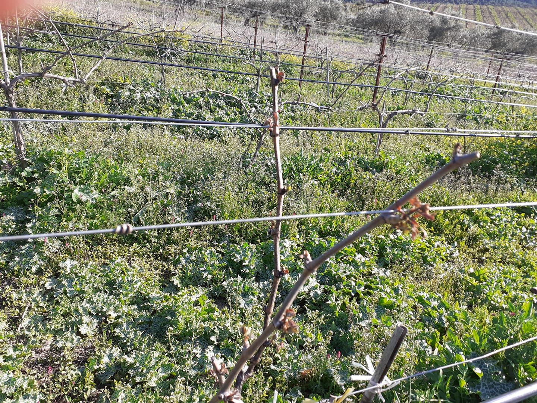 Αφορά και τον Θερμαϊκό: Εξαγγελία Καλαφάτη για τους πληγέντες αγρότες