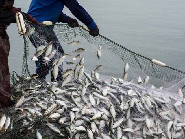 Ενδιαφέρει την περιοχή μας: Υποβολή αιτήσεων χρηματοδότησης για την αλιεία