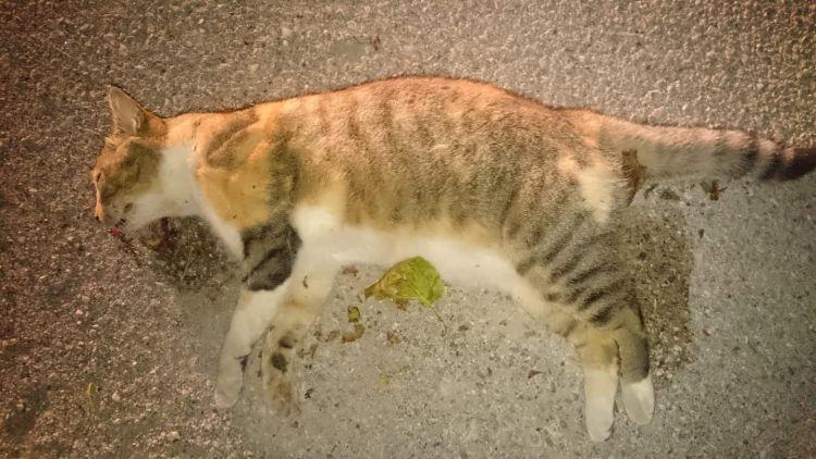 Ενδιαφέρει: Πρόγραμμα περισυλλογής νεκρών ζώων από την Περιφέρεια