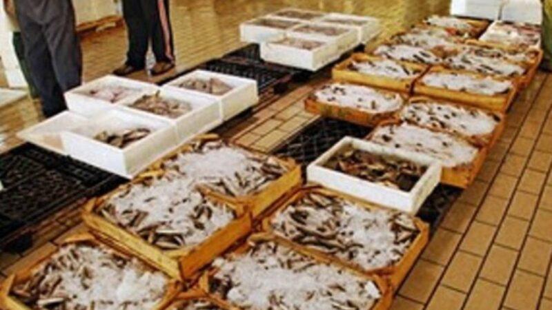 Ιχθυόσκαλα: Κατασχέθηκαν 107 κιβώτια με κουτσομούρα-Χαμός με τις τιμές του γαύρου και της σαρδέλας