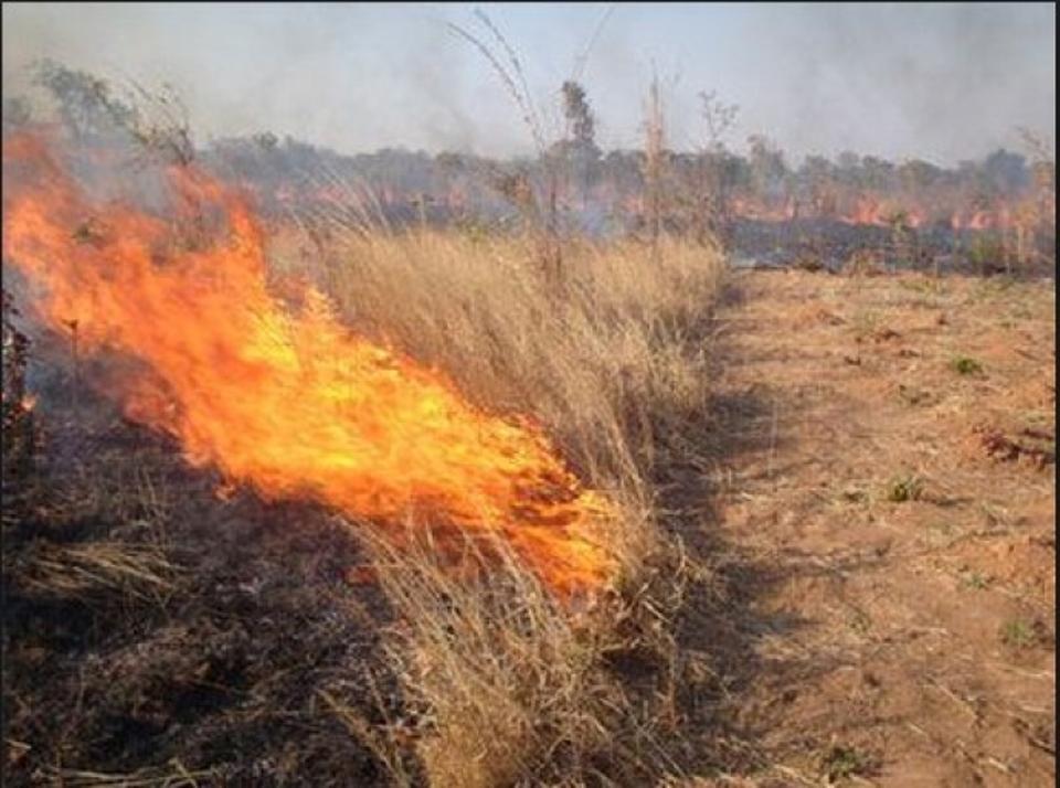 Εσβησε η φωτιά στο Αγγελοχώρι-Κάηκαν καλαμιές