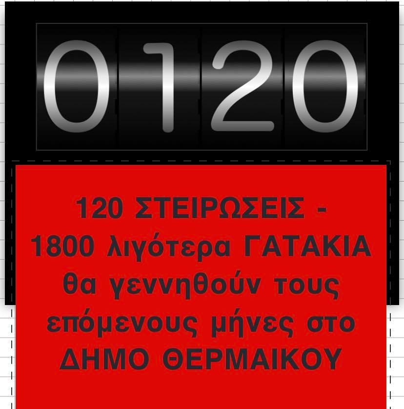 Σείριος: 120 στειρώσεις, 1800 γατάκια λιγότερα στον Δήμο Θερμαϊκού