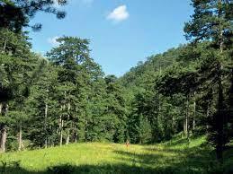 Παράταση διέλευσης από δάση και πάρκα εώς τις 3 Σεπτεμβρίου
