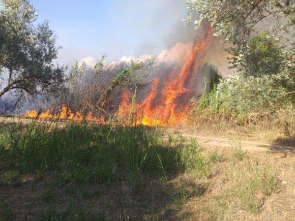Πυρκαγιά στο Μεσημέρι έκαψε ελιές