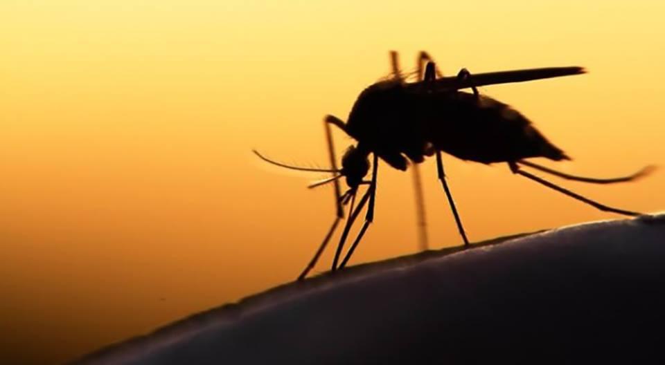 20η Αυγούστου: Παγκόσμια Ημέρα κατά των Κουνουπιών