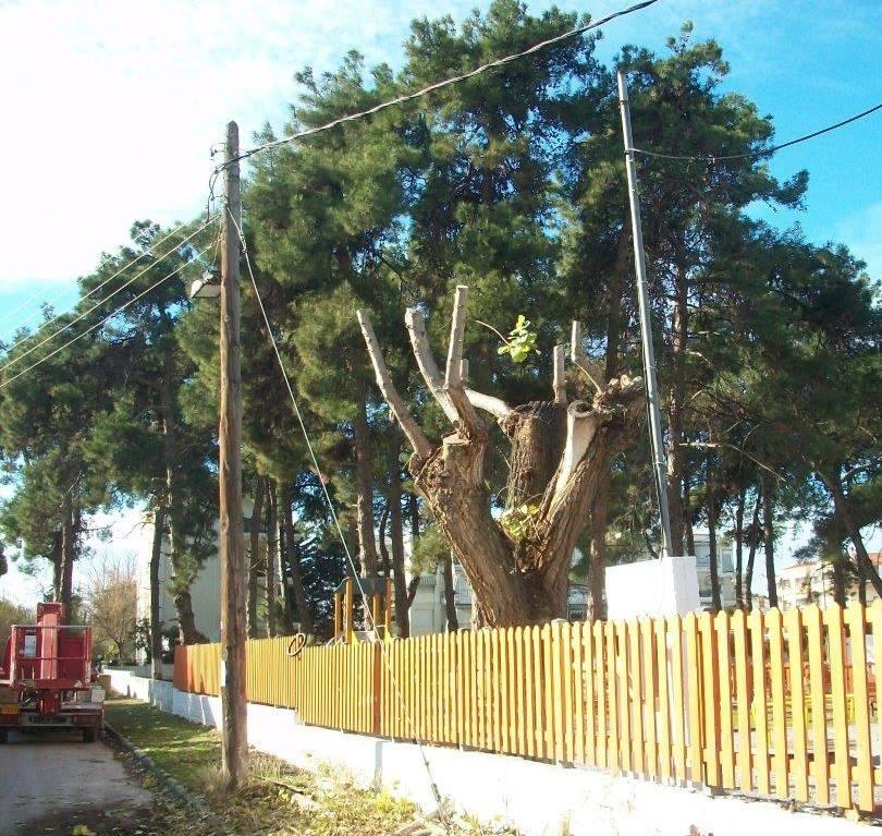 Ενδιαφέρει: Εγκύκλιος για το κλάδεμα των δέντρων