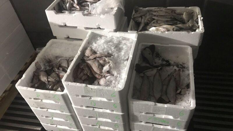 Ιχθυόσκαλα: Κατασχέθηκαν κιβώτια με γλώσσες, τσιπούρες, σαργούς και μπακαλιάρους