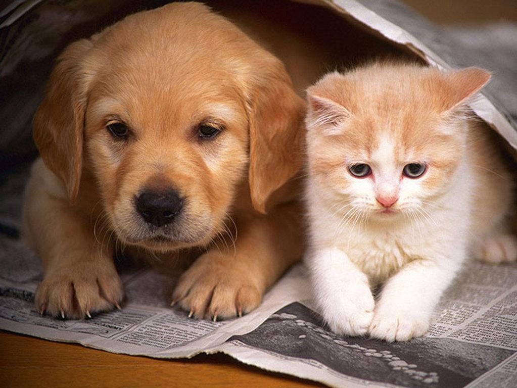 Παγκόσμια Ημέρα των Ζώων-Χρόνια πολλά στους τετράποδους φίλους μας!