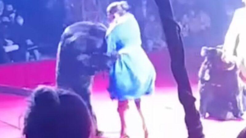 Πανικός σε τσίρκο στη Ρωσία – Αρκούδα επιτέθηκε σε γυναίκα θηριοδαμαστή που ήταν έγκυος (BIΝΤΕΟ)